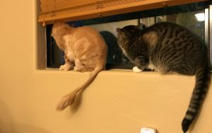 Tycho and Gus perched on a windowsill looking out