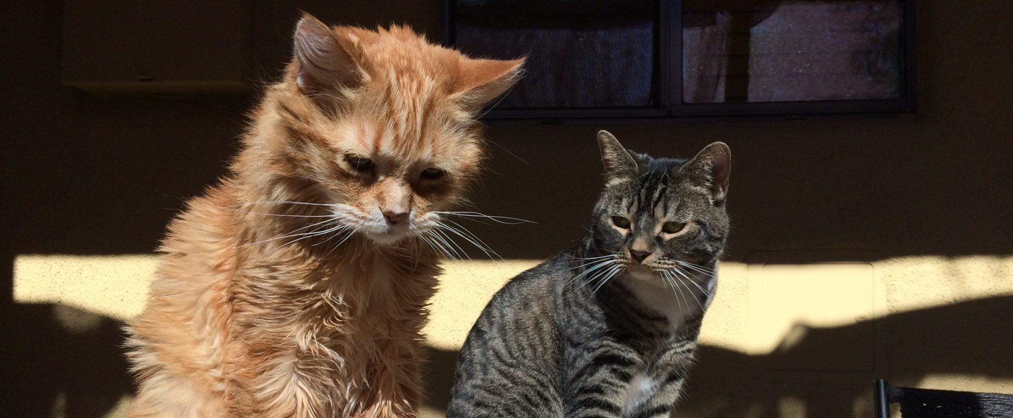 Kat's Kitties