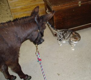 a miniature donkey checking out a skeptical Kepler