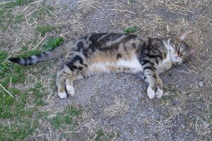 kepler sprawled out on the ground outside the barn