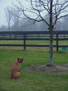 Kepler sitting in a tree in front of our dog Maggie