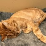 tycho napping on his purr pad