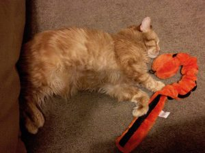 Tycho snuggling with an orange dog toy