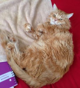 Tycho sprawled on the bed with long fur