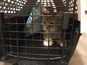 Tycho looking sad in a cat carrier about to go in for routine vet care