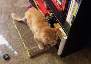 Tycho sitting on a cardboard scratcher
