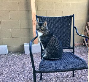 Gus sitting on a chair in the backyard